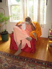 Sadhu Maharaja
